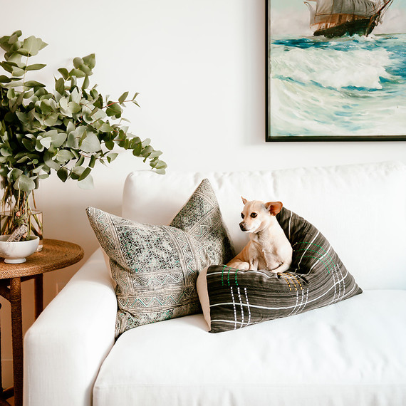 small dog laying on pillow on white couch