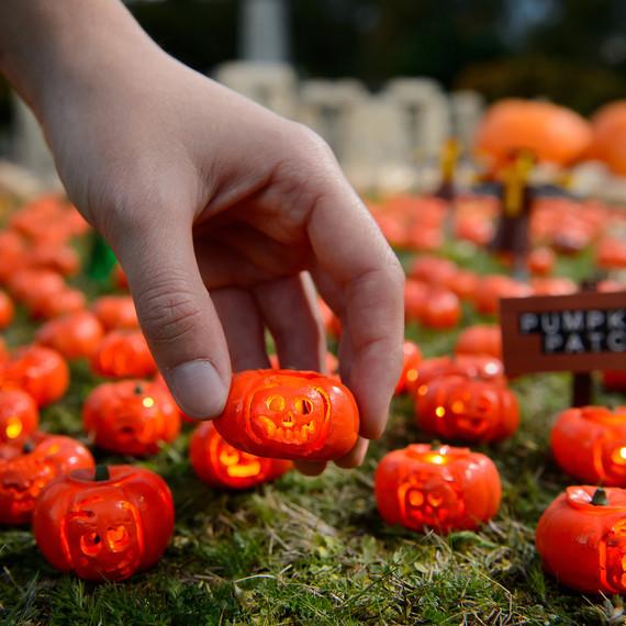 smallest-pumpkin-patch-1016-2.jpg (skyword:355304)