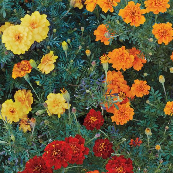untermeyer-garden-077-d111583.jpg
