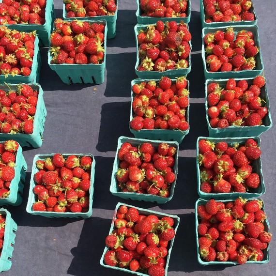 tristar strawberries