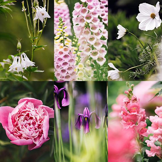 bellefield border flowers