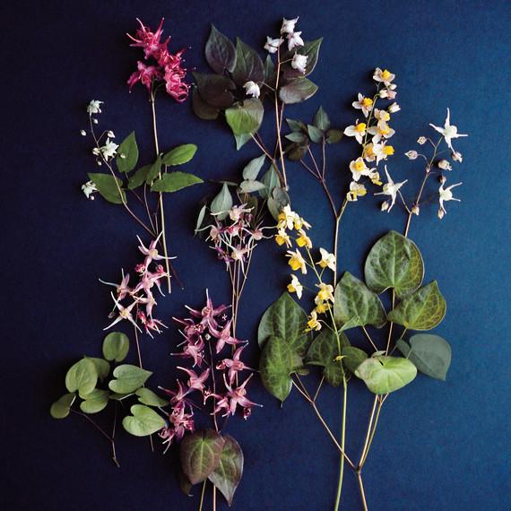 epimedium-flowers-md110227-54n.jpg