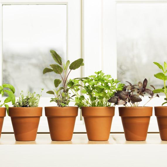 A Guide To Growing Kitchen Windowsill Herbs Martha Stewart