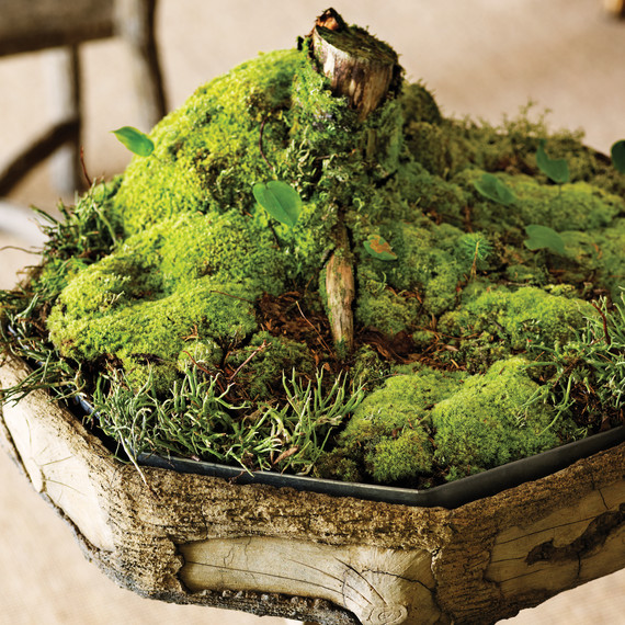 How To Take Care Of Moss Martha Stewart