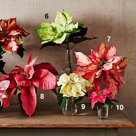 poinsettia display arrangement