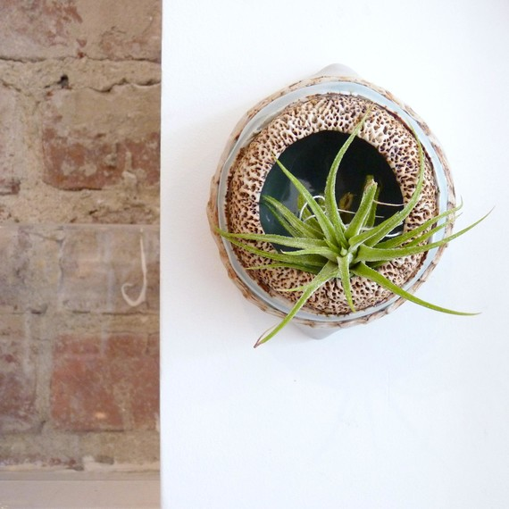 air-plant-apartment-decor-06-15