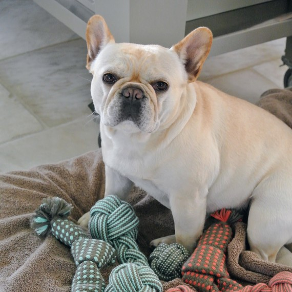 dog next to rope toys