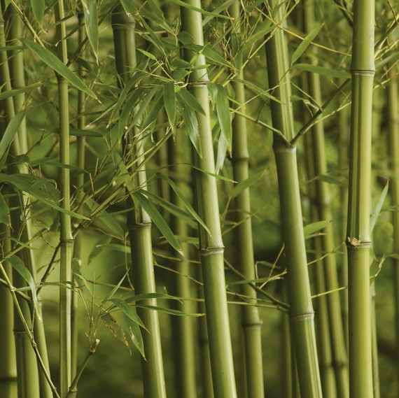 bamboo forest plants