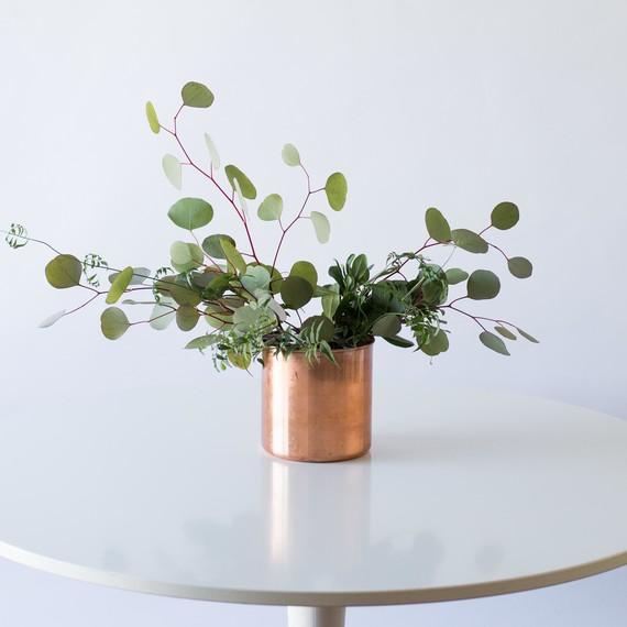 step-2-foliage-euc-jasmine-030915