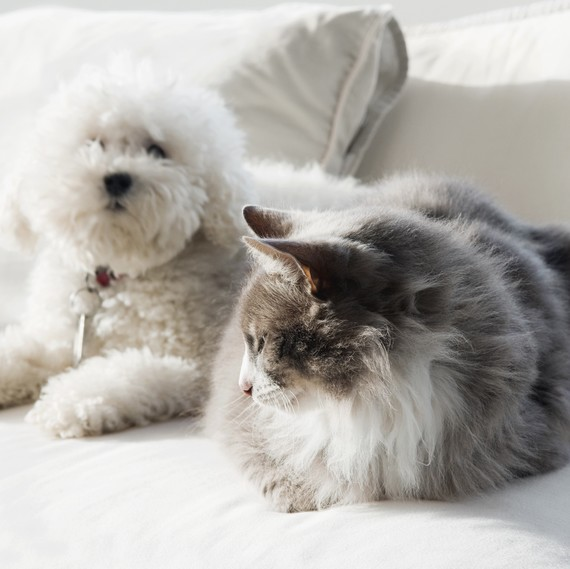 Seven Things You Haven't Tried Doing to Get Pet Odors Out of Your Home