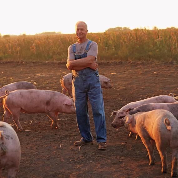 pig-farm-iowa-06a6074-mld109360.jpg