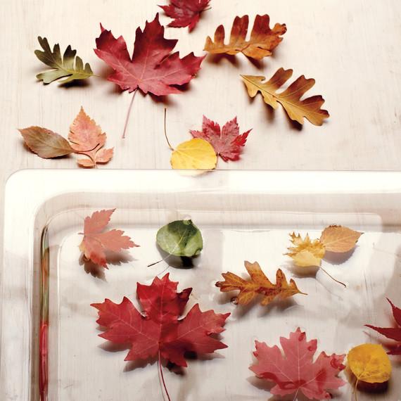 preserving-leaves-058-mld110409.jpg
