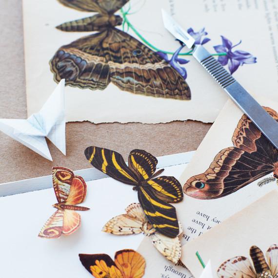 butterfly-details-1-lova-blavarg.jpg