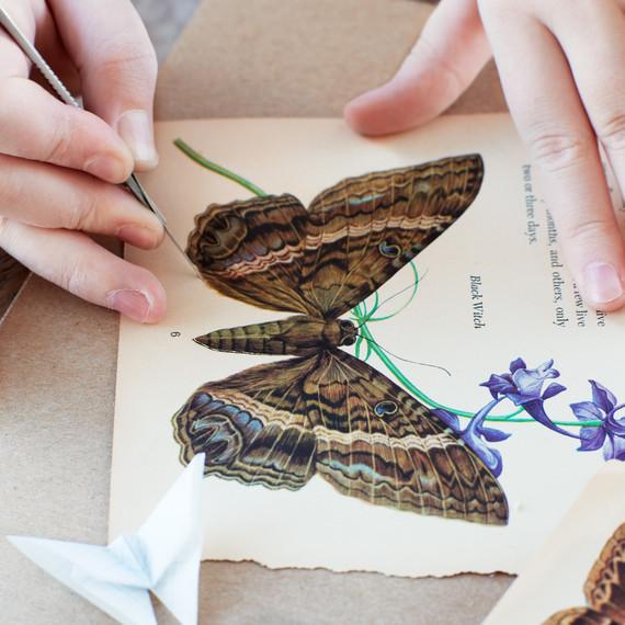 butterfly-details-2-lova-blavarg.jpg