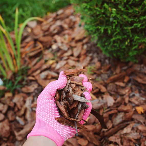 how to choose mulch
