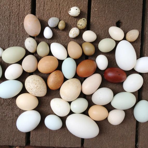mixed-eggs-nakedeggs-easter-post.jpg