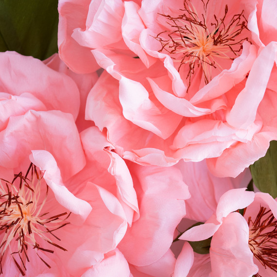 paper rose by Jennifer Tran