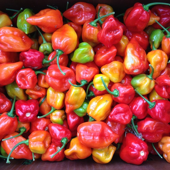 peppers-homesweet-homegrown-0717