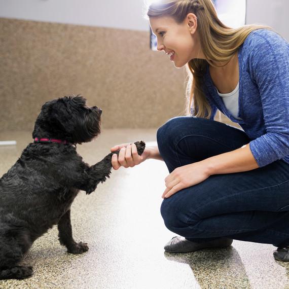woman dog shake tricks
