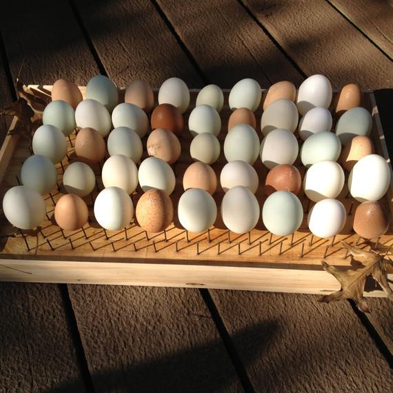 drying-eggs-nakedeggs-easter-post.jpg