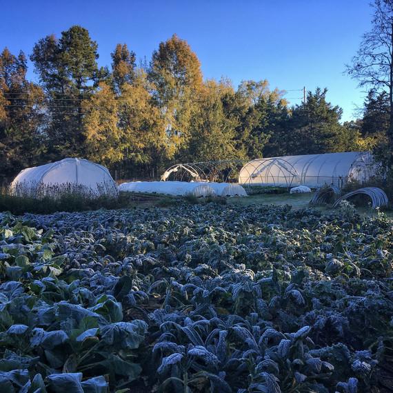 十个母亲农场霜冻场
