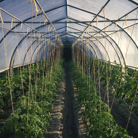 poly tunnel ten mothers farm