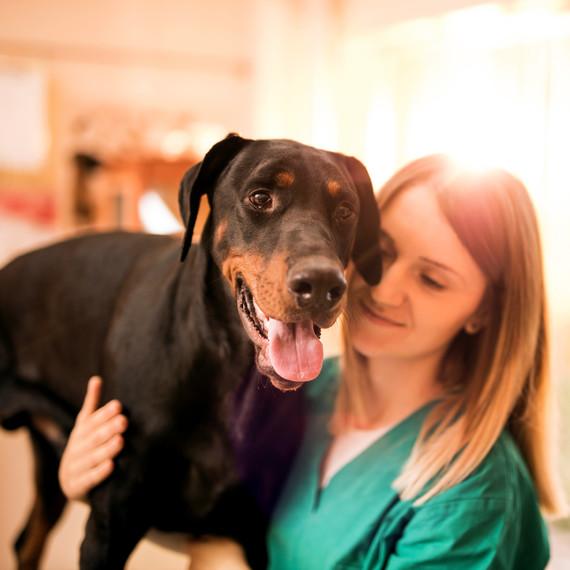 vet with black doberman dog