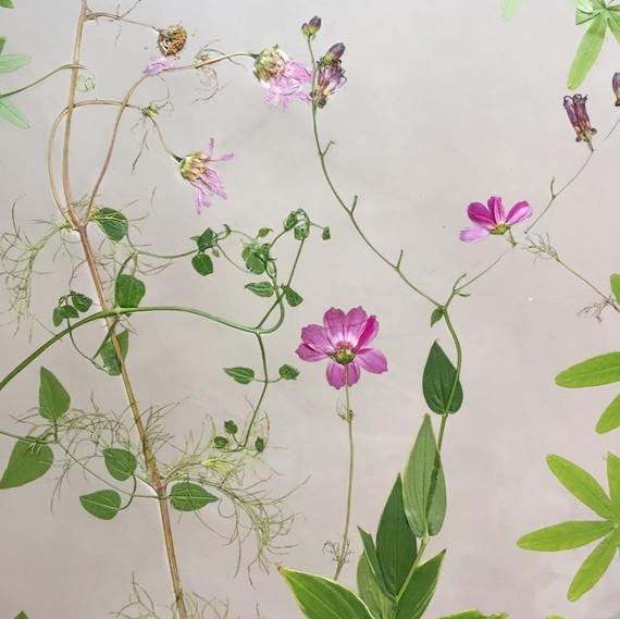 floral-fossils-ronni-nicole
