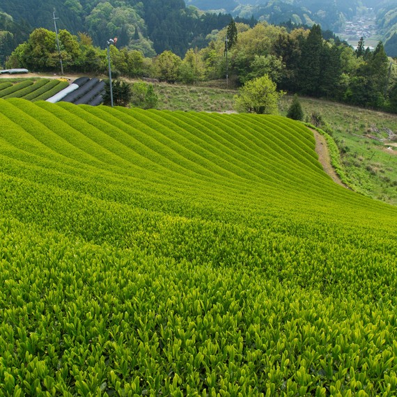 ippodo-tea-garden-japan-0417