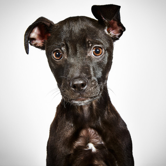 rescue me book puppy