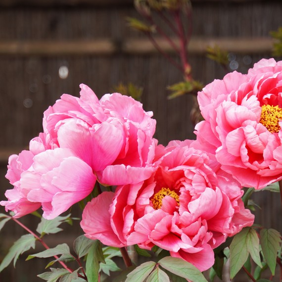The Difference Between Annual and Perennial Flowers
