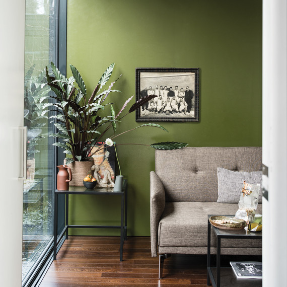 Green Painted Living Room With Plant Near Window