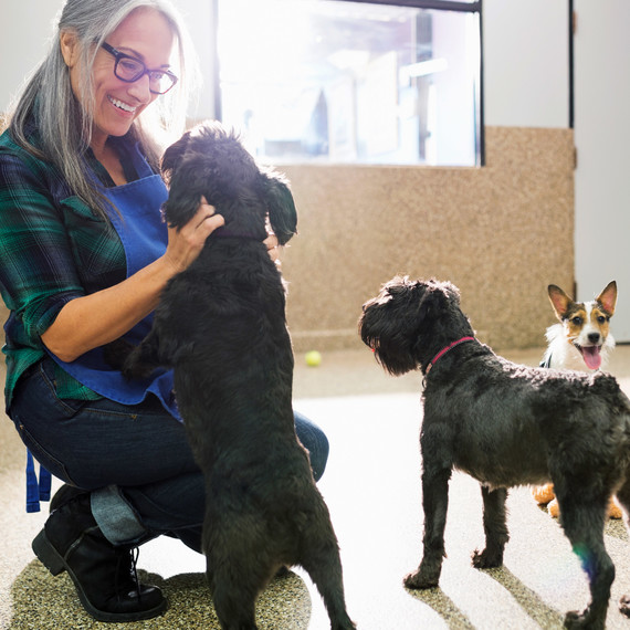 dog trainer puppies ear scratches in facility