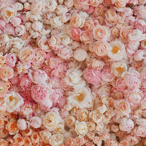 Lucy Cuneo Fine Art Flower series
