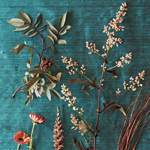 brown-plants-nursery-ff-1190-d109224.jpg
