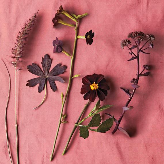 brown-plants-nursery-ff-1250-d109224.jpg