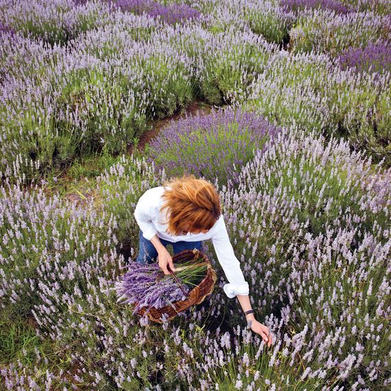lavender-gherman-blueskye-98-d110407.jpg