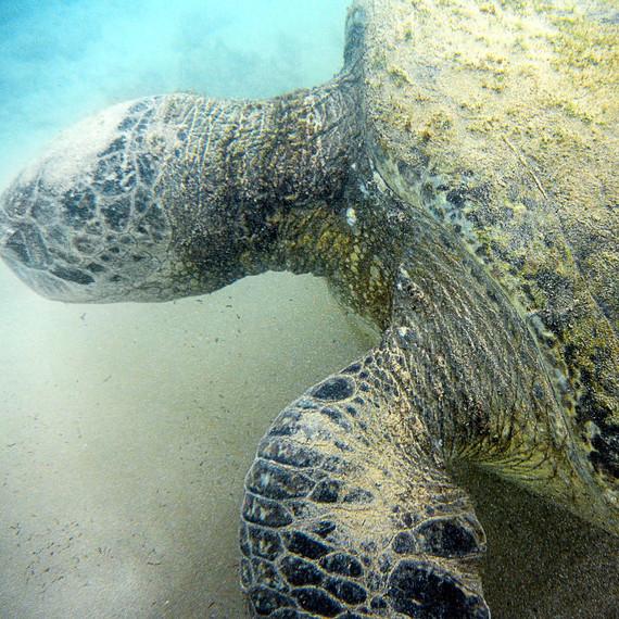 martha travel turtle