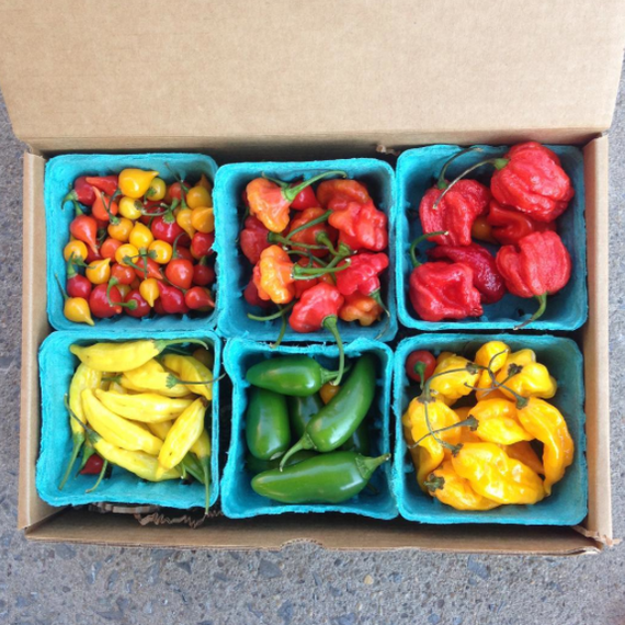 peppers-csa-homesweet-homegrown-0717