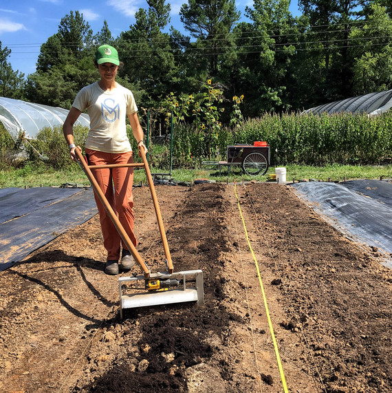 vera ploughing ten mothers farm