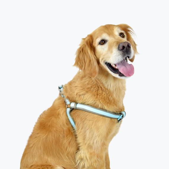 golden retriever harness amazon