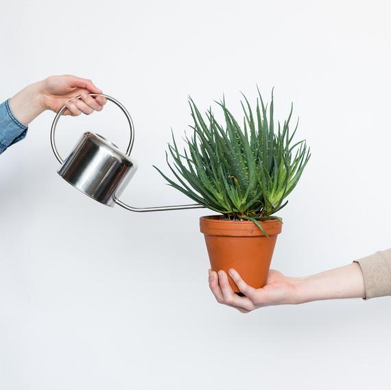 plant  bloomscape