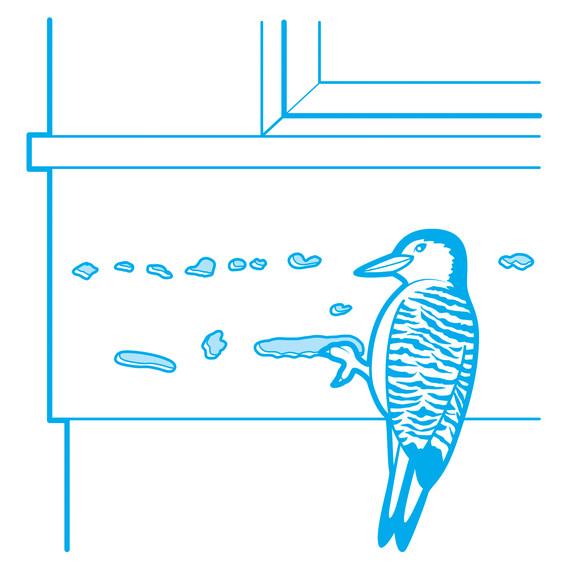 wood-pecker-prevention-illustration-3.jpg