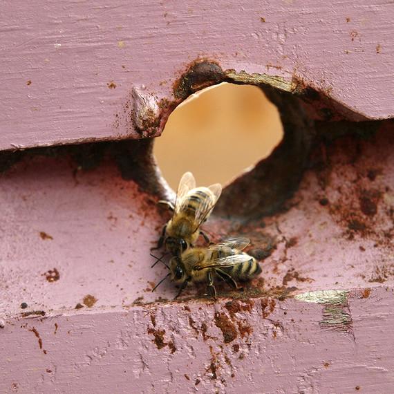 beekeeping-lessons-waxing-kara-04-0723.jpg
