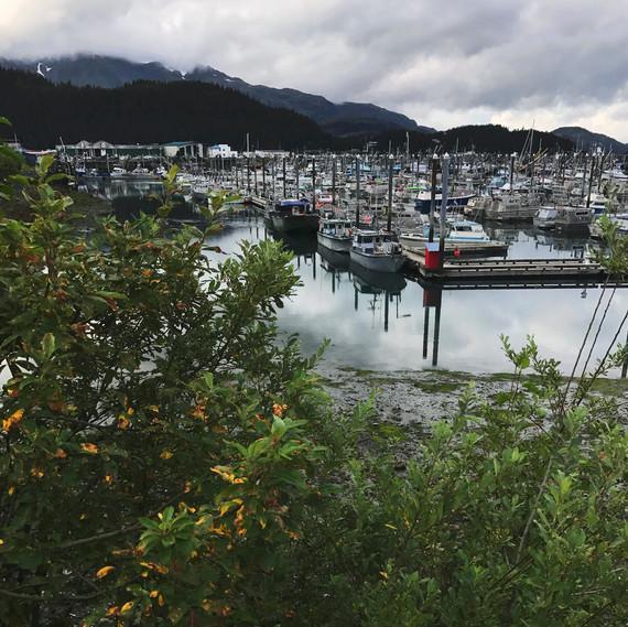 cordova harbor full drifters fish