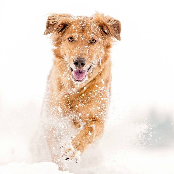 dog playing in the snow
