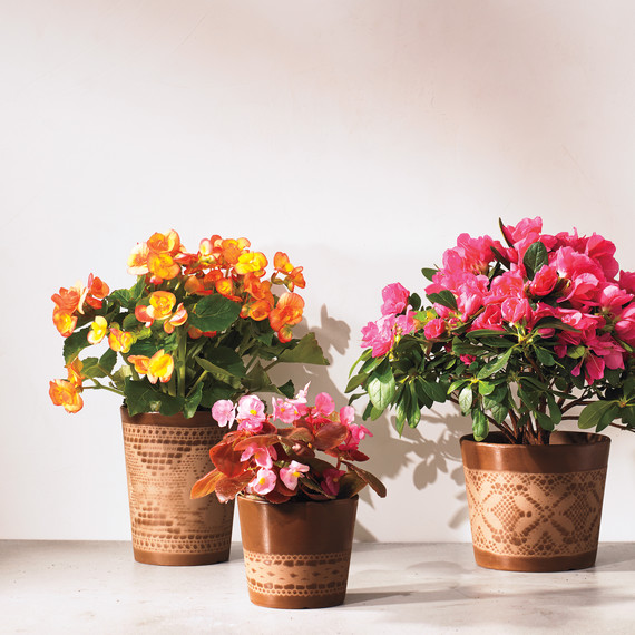 decorative flower pots | martha stewart