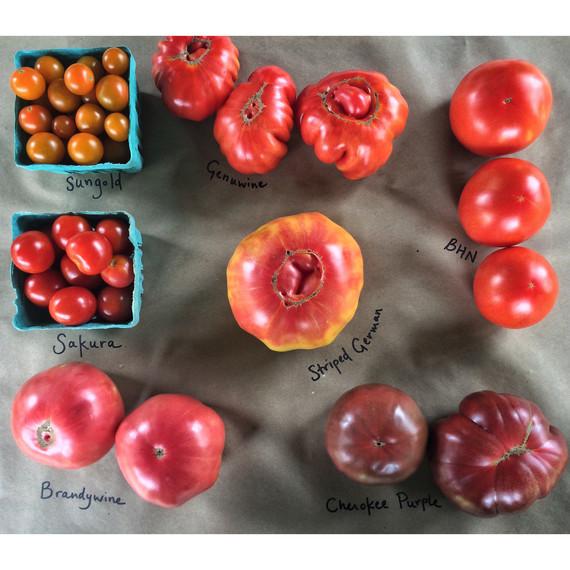 different tomato varieties