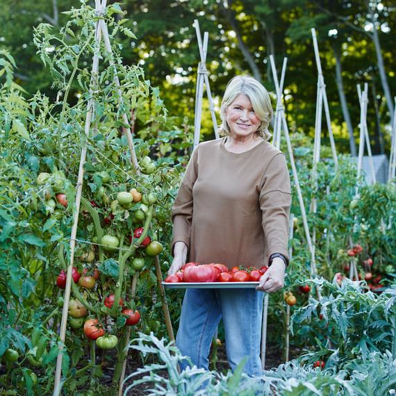 10-martha-tomato-portrait-68653-d112503.jpg