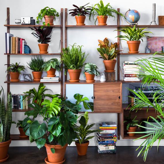 plant shelfie bloomscape